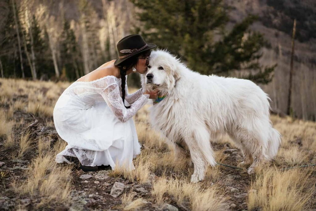 great pyrenees at elopement